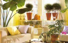 Где купить комнатные растения