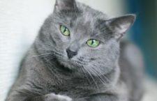 Выбор сухого корма для кошек